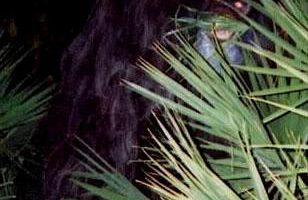 Le Skunk Ape