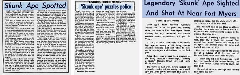 Articles journaux Skunk Ape