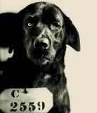 Pep, le chien tueur de chat