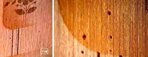 Taches de Sang sur le Mur