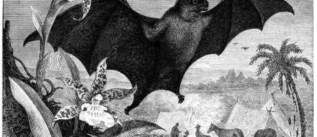 Les Vampires de Dillsboro
