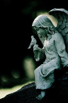 L'Ange et l'Oiseau